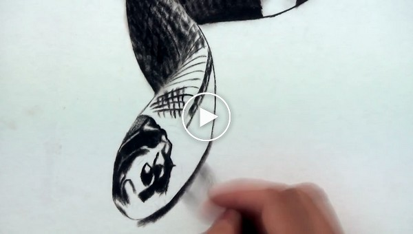 Мастер 3D живописи  оживил  змею на листе бумаги
