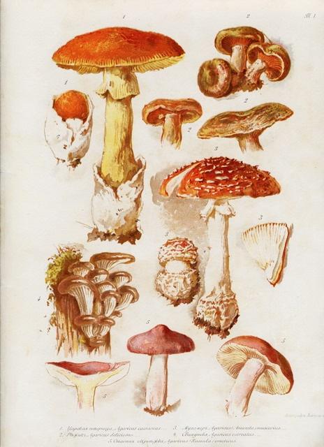 Елизавета Меркурьевна Бем - Иллюстрированный каталог открыток (376 фото)