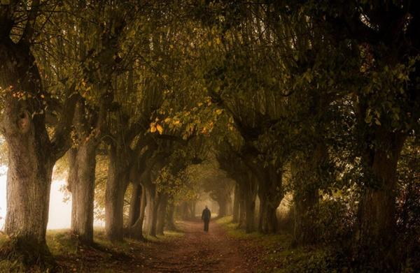 Деревья от Heiko Gerlicher (74 фото)