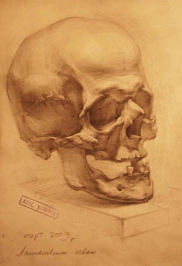 Human anatomy drawing (10 работ)
