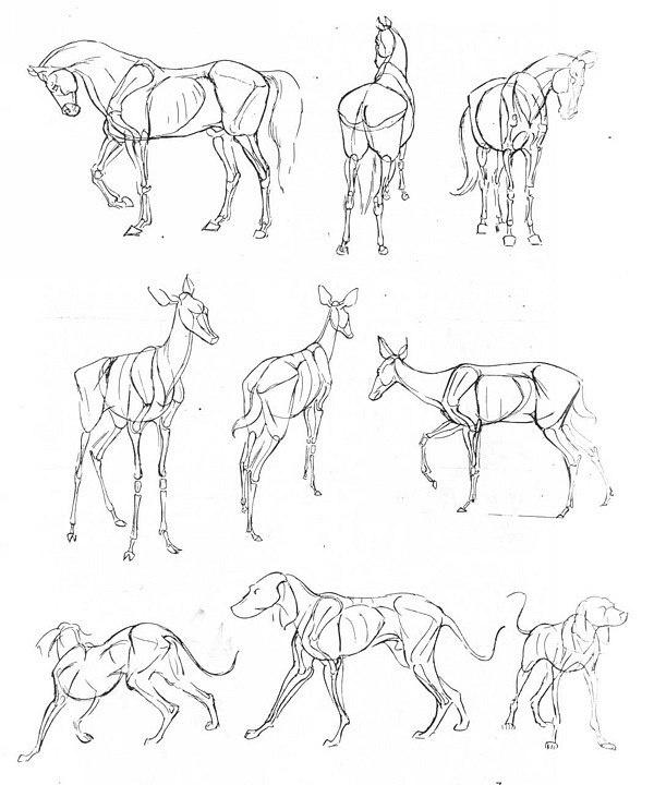 Ken Hultgren. Подсказки при рисовании животных (44 работ)