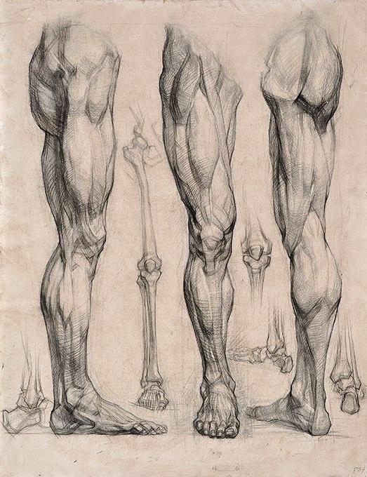 Академический рисунок ног и рук (9 работ)