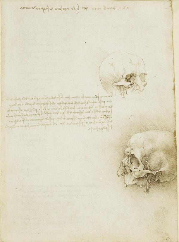 Анатомические рисунки Леонардо да Винчи (285 работ)