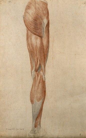 Анатомический рисунок (217 работ)