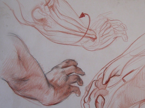 Анатомическое пособие руки (10 работ)