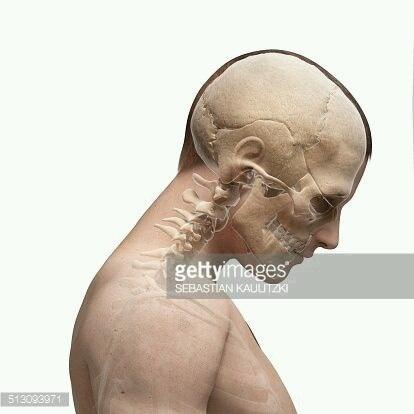 Анатомия головы (10 работ)