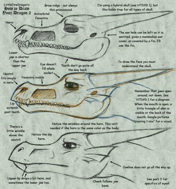 Анатомия, схемы, примеры (16 работ)