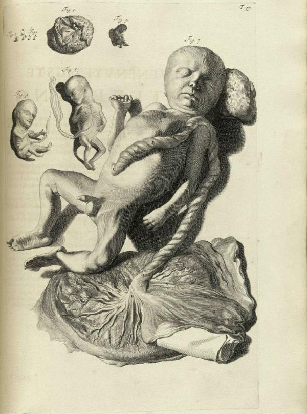 Атлас анатомии (1685). Govard Bidloo (56 работ)