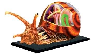 Интересные наглядные пособия по анатомии различных животных (6 работ)