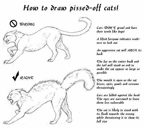 Как рисовать кошек (6 работ)