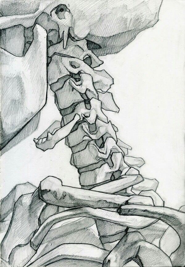 Нарисованный анатомический скелет (10 работ)