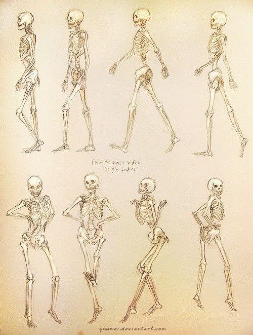 Небольшая подборка материалов по анатомии человека (10 работ)