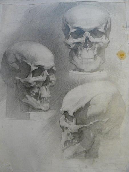 Подборка анатомических рисунков (19 работ)