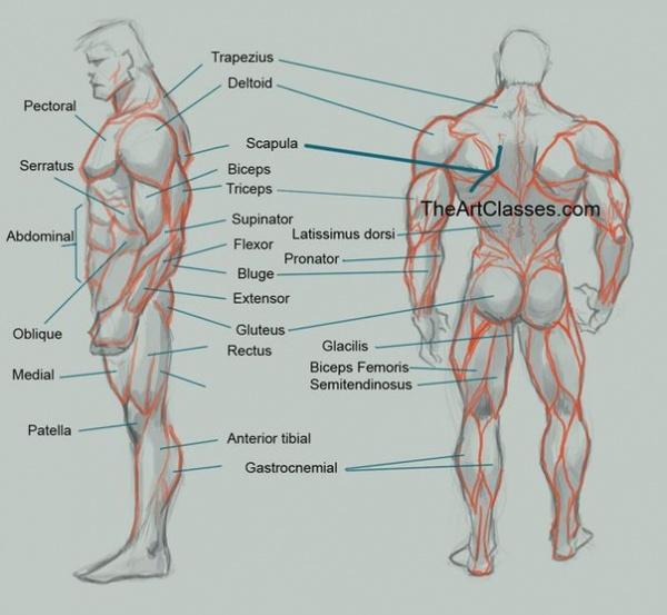 Пропорции тела (88 работ)