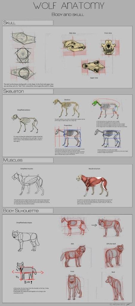 Учимся рисовать животных. Волки (7 работ)