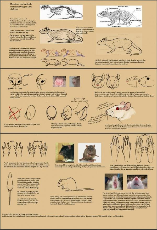 Учимся рисовать животных. Грызуны (742 работ)