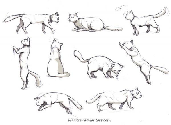 Учимся рисовать животных. Домашние кошки (6 работ)