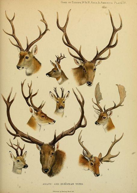 Учимся рисовать животных. Животные (8 работ)