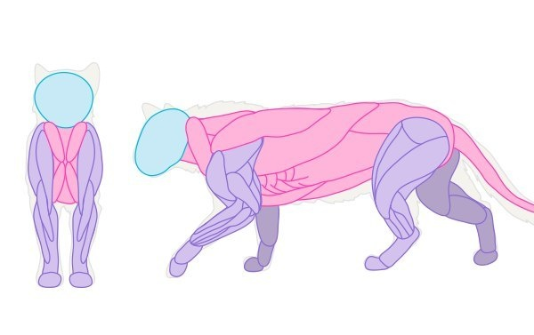 Учимся рисовать животных. Кошачьи (658 работ)