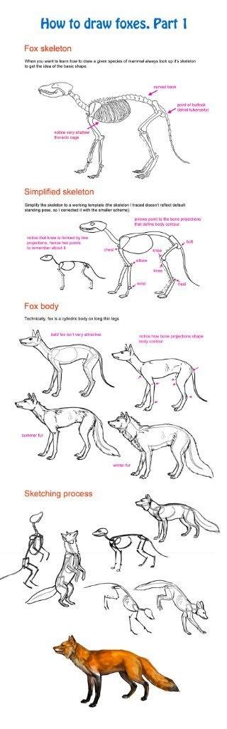 Учимся рисовать животных. Лисы (85 работ)