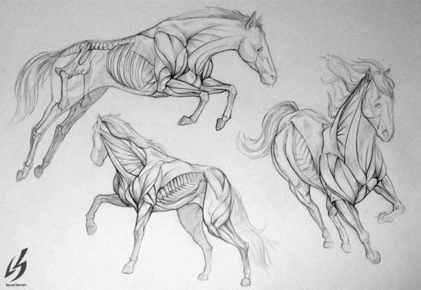 Учимся рисовать животных. Лошади (345 работ)