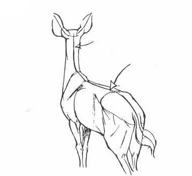 Учимся рисовать животных. Лошади от Ken Hultgren (44 работ)
