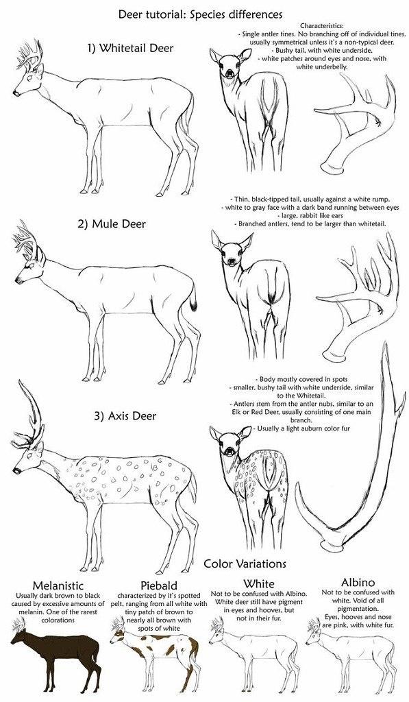 Учимся рисовать животных. Олени, лоси (74 работ)