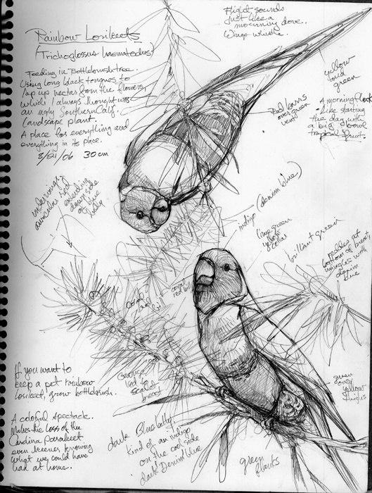 Учимся рисовать животных. Птицы (377 работ)