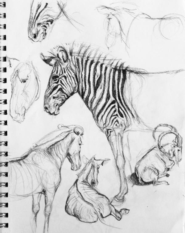 Учимся рисовать животных. Разные животные (365 работ)