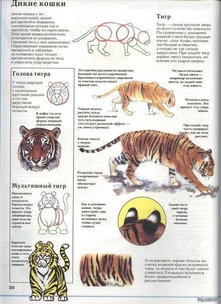 Учимся рисовать животных. Тигры (6 работ)