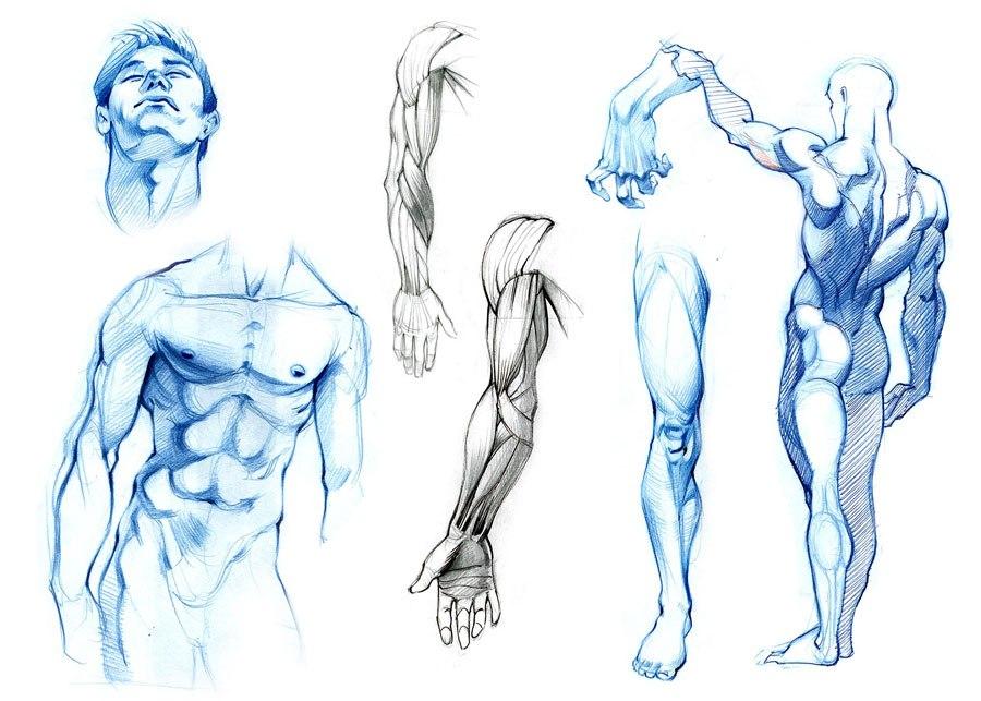 здесь анатомия человека картинки рисование рецепт