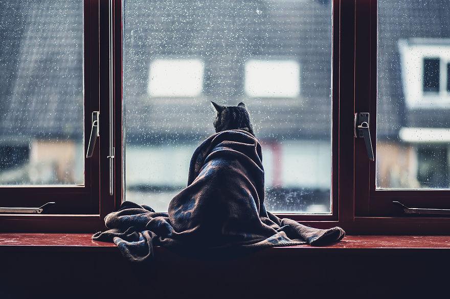 Девушка спасается от страхов с помощью фотосъемки кошек (16фото)