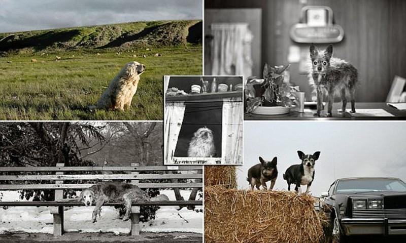 Фотохудожница делает портреты собак-пенсионеров (10фото)
