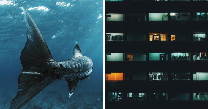 Снимки-победители самого массового фотоконкурса мира (41фото)