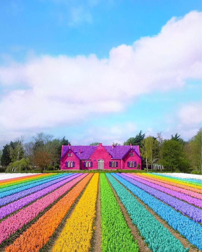 как сделать цвета на фото ярче вещи украшают только