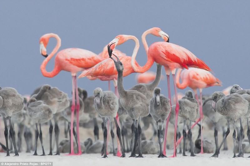 Объявлен победитель фотоконкурса Bird Photographer Of The Year (13фото)