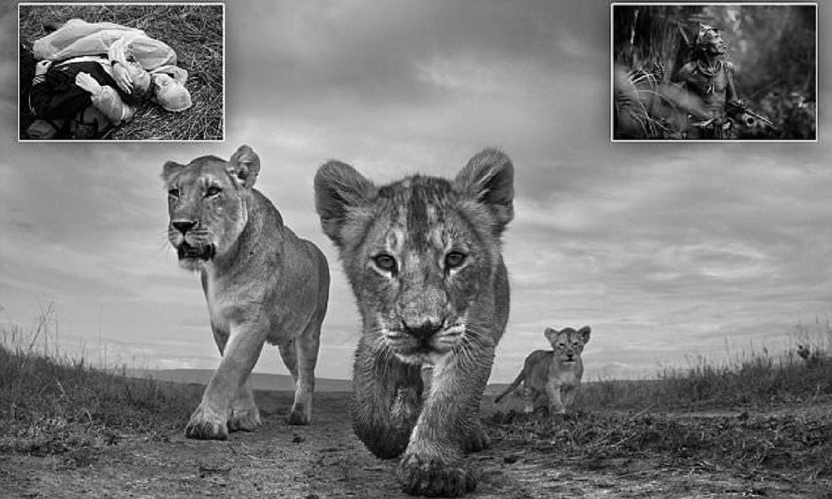 Фотографы показали жизнь в черно-белом цвете (29фото)