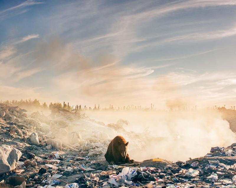 Один из самых печальных снимков, которые вам приходилось видеть в своей жизни (7фото)