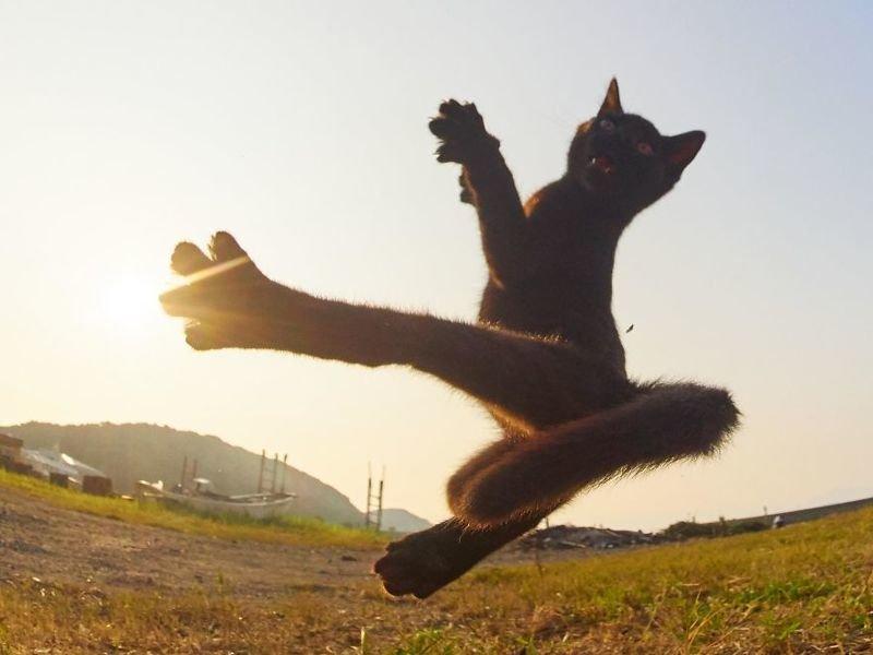 Японский фотограф посвятил свою жизнь съемкам кошек-«ниндзя» (40фото)