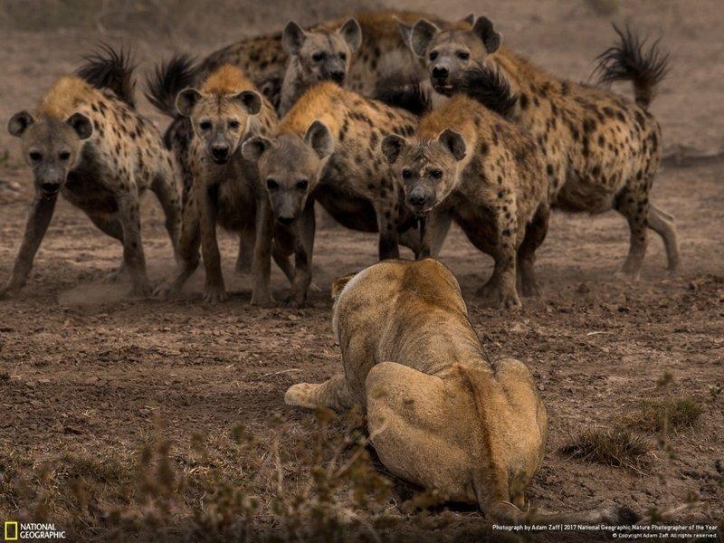 Снимки National Geographic (19фото)
