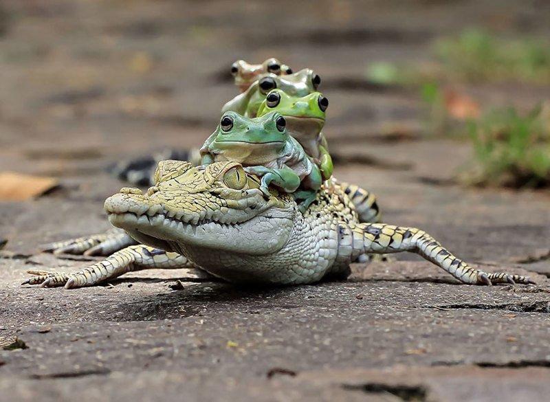 Царевна-лягушка: индонезиец снимает неожиданные грани обычных лягушек (39фото)