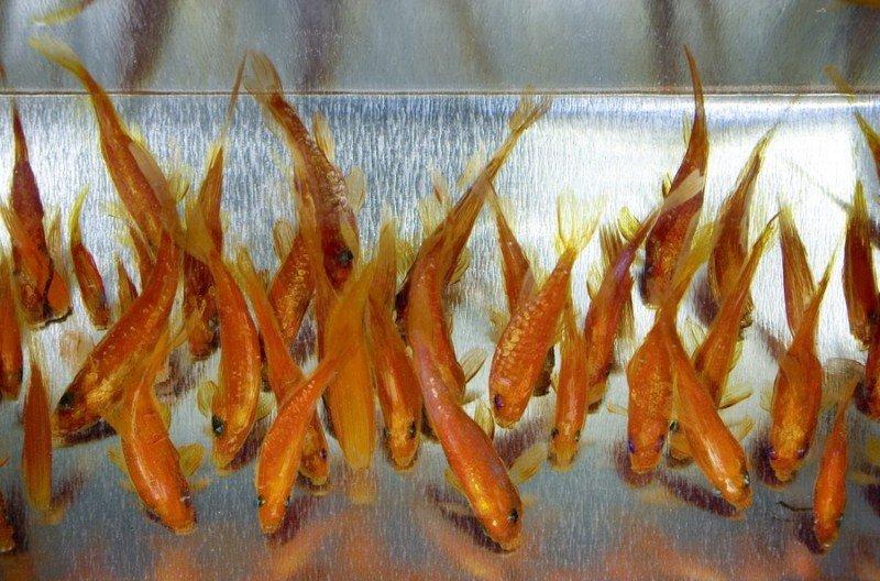 Трёхмерные рисунки японского художника Рюсуке Фукахори (14фото)