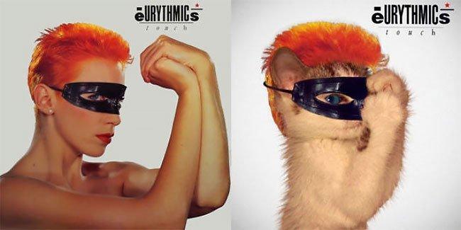 Художник создал очаровательные обложки музыкальных альбомов, заменив певцов на котиков (35фото)