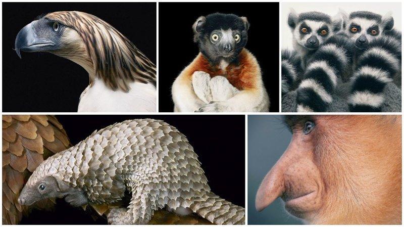 Восхитительные снимки редких животных от фотографа Тима Флача (44фото)
