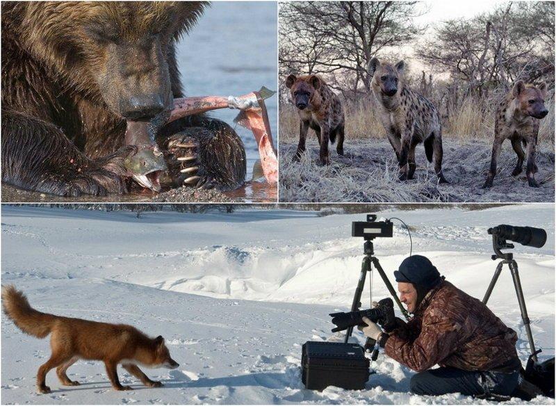 Дикая природа на снимках Сергея Горшкова (28фото)