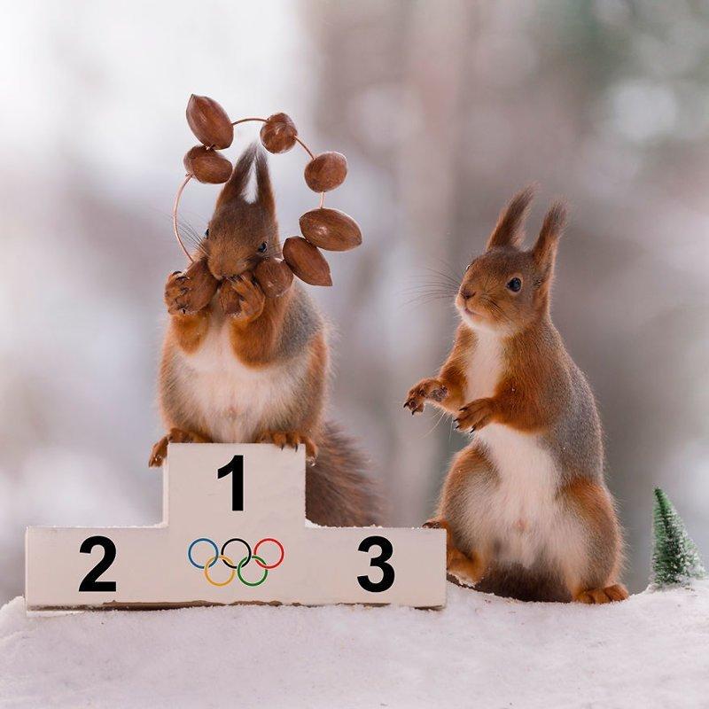 Зимние Олимпийские игры для белок (15фото+1видео)