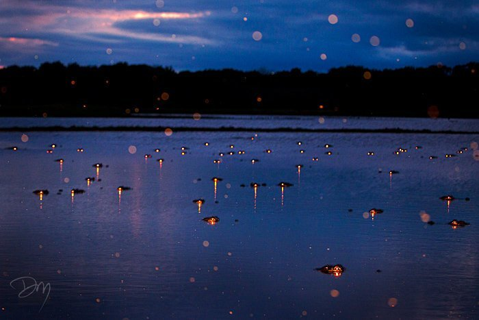 Парень просто сфотографировал ночное болото (5фото)