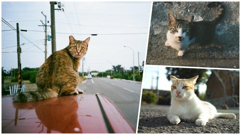 Тайваньский фотограф снимает на плёнку колоритных уличных котов (21фото)