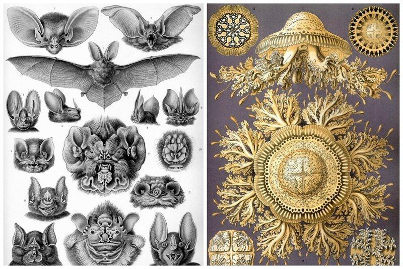 Невероятный взгляд на красоту природных форм в рисунках Эрнста Геккеля (25фото)