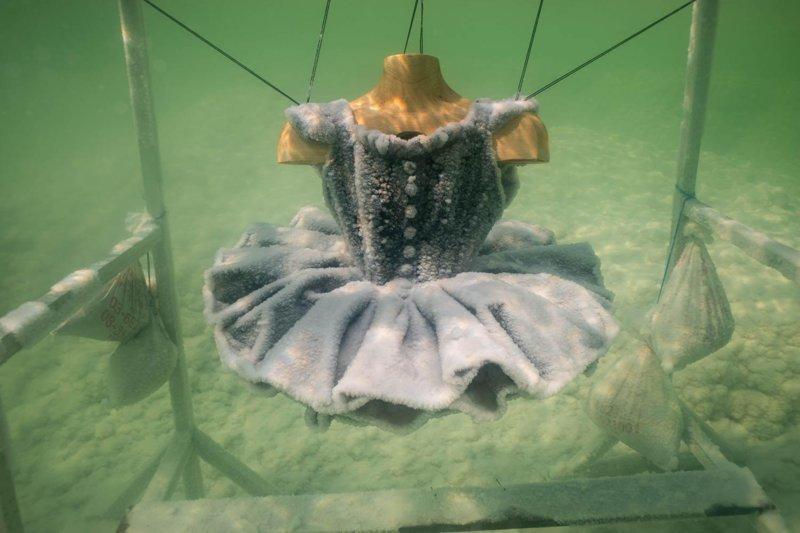 Художница создает шедевры с помощью Мертвого моря (12фото)